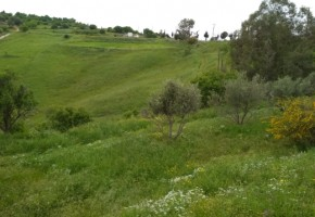 Residential Land  For Sale  in  Choletria